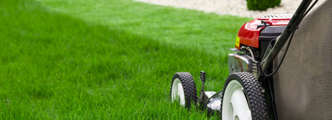 Lawn Maintenance and Watering in Edmonton